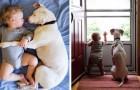 Dieser misshandelte Hund fand wieder Ruhe neben einem Baby: Die Bilder sind wunderschön