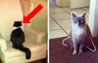 20 lektioner som man lär sig när du bor med en katt