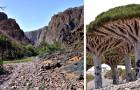 Socotra, una meravigliosa isola così remota da risultare