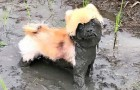 Vídeo de Cachorros