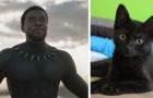 Il successo al botteghino di questo film fa aumentare le adozioni di gatti neri