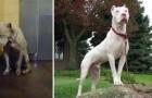 Diese wunderbaren Fotos von Hunden nachdem sie adoptiert wurden, lässt uns in Frieden mit der Welt kommen