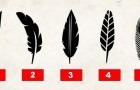 Which feather do you prefer? The answer reveals something about your personality!
