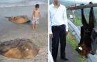 Video Australien-Videos Australien