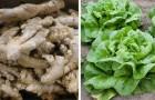 6 hortalizas que puedes regenerar comodamente en casa a partir de los descartes de la cocina