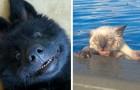 23 foto divertenti che dimostrano che gli animali non sono altro che umani con la pelliccia addosso