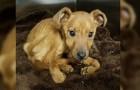 Video Video's van Puppies Puppies