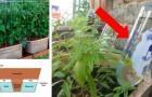 11 DIY automatiska bevattningssystem som gör trädgården ännu enklare