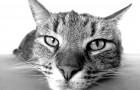 10 wissenschaftlich erwiesene Vorteile die man erfährt wenn man mit einer Katze zusammen lebt