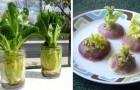 13 växter som du kan regenerera från matavfall