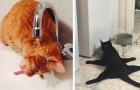 18 gatos que fazem coisas sem sentido e que nos fazem morrer de rir