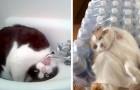 Des chats maladroits et gaffeurs : après avoir vu ces images, vous les aimerez encore plus.