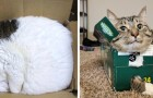 20 fotos de gatos que demonstram que eles não têm a mínima ideia do que seja uma cama
