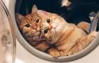 Estas fotos de gatos são tão divertidas que você vai querer adotar um!
