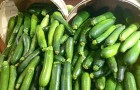Come coltivare zucchine sul proprio balcone e farne crescere in quantità