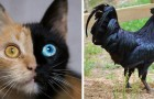 20 Beispiele einer ungewöhnlichen Färbung bei Mutter Natur's Kreaturen