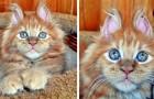 20 foto's van babydieren die zo lief zijn dat ze zelfs de meest grijze dag kleuren
