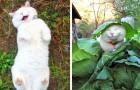 21 foto di cani e gatti che vi risolleveranno lo spirito alla prima occhiata