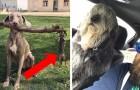 Cani colti in situazioni esilaranti: davanti a queste 26 foto è impossibile non ridere