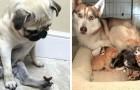 24 foto's van honden waarbij je niet serieus kunt blijven