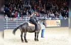 Het favoriete lied van het paard start: de reactie van het dier zorgt voor een applaus van de menigte
