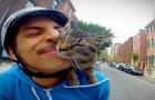 GoPro: en route sur le vélo avec le chat