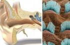 Das Ohr mit Licht behandeln: Optische Stimulation kann der Wendepunkt gegen Hörprobleme sein