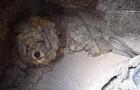Grecia: un caniche aterrorizado se salva de los incendios escondiendose en un horno