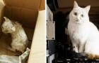 Video de Gatos