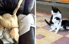 24 photos d'animaux tellement bizarres qu'ils vous feront rire à gorge déployée