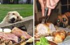 Estas fotos mostram o amor dos cachorros pela comida