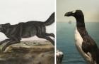 13 Tierarten, die die ersten amerikanischen Siedler noch gesehen haben ... die Sie aber nur noch in Biologiebüchern sehen können