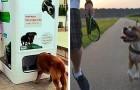 Voici comment certains pays du monde font face au problème des chiens errants