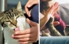10 comportamientos en donde el gato te esta comunicando que te ama...inclusive si no te das cuenta