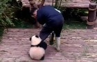 Ecco perché fare il guardiano di cuccioli di panda è il lavoro più bello del mondo