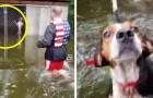 Deze honden zijn in hun kooien achtergelaten tijdens de orkaan Florence: enkele vrijwilligers keerden terug om hen te redden