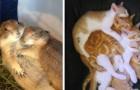 11 Beispiele für tierische Liebe, die selbst den dunkelsten Tag erhellen können.