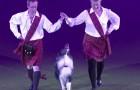 Le chien qui surprend tout le monde au Crufts 2014