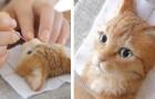 Video di Gatti