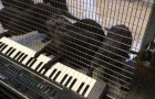 Even otters know how to play the piano ... or maybe !