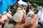 Drie flesvoeding professionals in actie