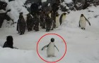Video Pinguinvideos Pinguine