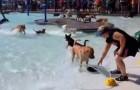 Voor de wintersluiting heeft dit zwembad een speciaal feest
