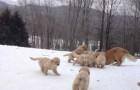 9 stupendi cuccioli prendono lezioni di... gioco