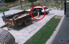 Vidéos de Voleurs