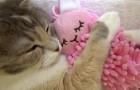 Pueden imaginar una imagen mas tierna de un gato que abraza su muñeco?
