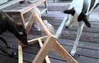 Voici la création d'un jeu de logique pour nos amis les chiens. A essayer!