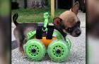 Questo cane è nato senza due zampe, ma l'amore della padrona compie un piccolo miracolo