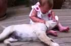 Tendre complicité entre deux bouts de chou: le chien et le bébé