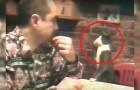 Cet homme est malentendant mais regardez comment son chat communique avec lui. Magique!